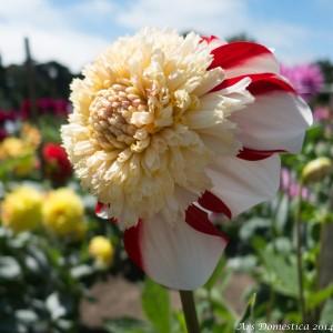 Flowers-0692