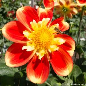 Flowers-0701