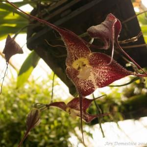 Flowers-0709